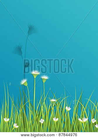 Green Grass With Little White Flower Background