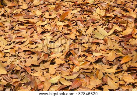 Autumn Season Background Red And Yellow Leaf Falling
