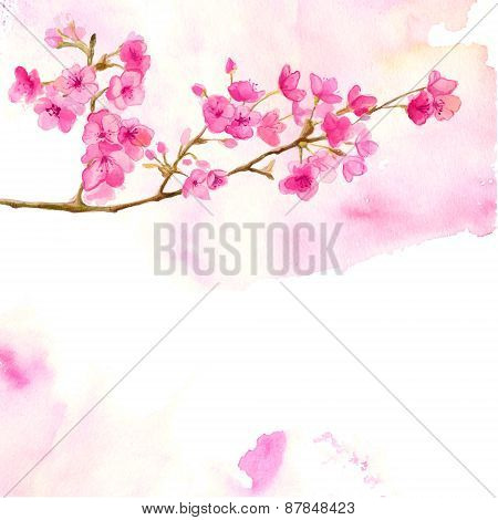 Pink background with watercolor branch of cherry blossom. Vector illustration of sakura.
