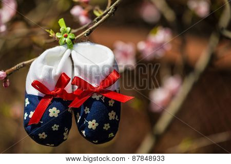 Baby Slippers Hanging On A Branch Of Blossoming Tree