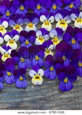 beautiful wild violets arrangement