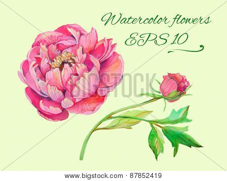 isolated floral elements of blossom  peony