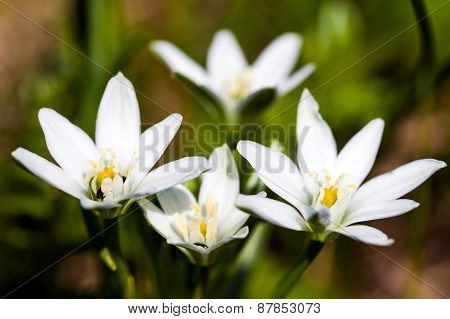 White Spring Flowers On Green Meadow