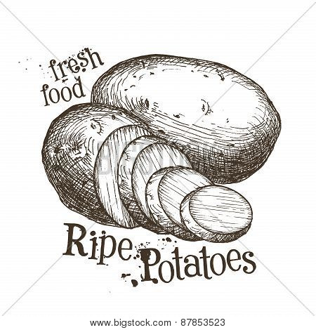 ripe potatoes vector logo design template. fresh vegetables, food or harvest icon.