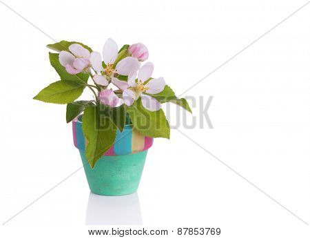 Twig with apple blossoms in a tiny flower pot