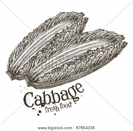 ripe cabbage vector logo design template. fresh vegetables, food or harvest icon.