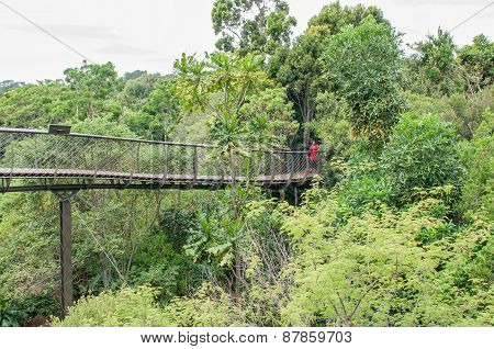 Kirstenbosch Tree Canopy Walkway, The Boomslang.