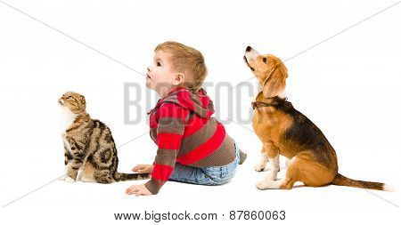 Cute boy, cat Scottish fold and beagle dog