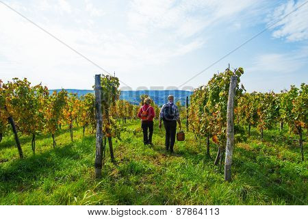 Senior Couple In The Vineyard