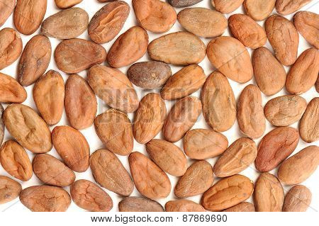 Raw Cocoa Beans Pattern Isolated