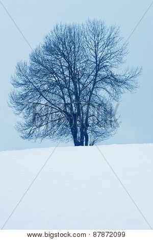 Winter Landscape With Tree And Snow In Navarra, Spain