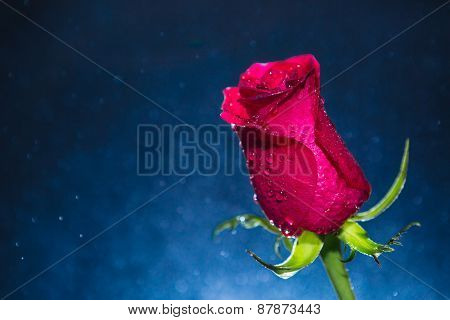 Red Rose And Background Of Bokeh