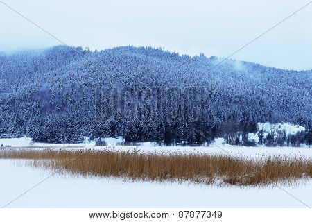 A Snowy, Cool Toned Winter Landscape That Combines Beauty With Cold.