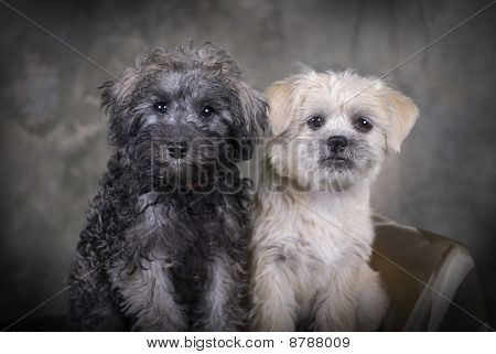 A Pair Of Puppies