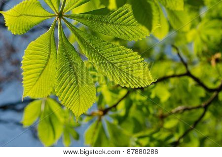 The Leaves Of The Chestnut Forest Backdrop