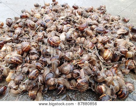 Mountain of mollusks