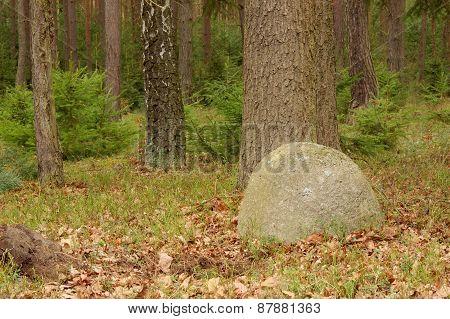 Wood stone.
