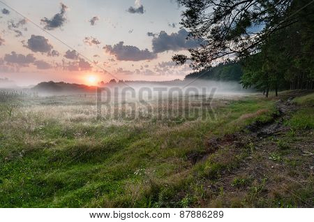 Summer misty dawn on the meadow