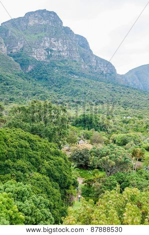 View Across Part Of The Kirstenbosch Botanical Gardens