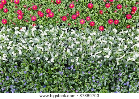 Flowers in rows and lines showing colors of dutch flag
