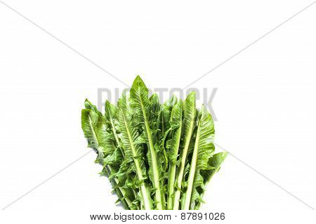 Catalogna Chicory Bunch Isolated On White Background