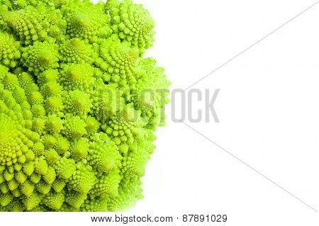 Roman Broccoli Close Up Isolated On White Background With Copyspace
