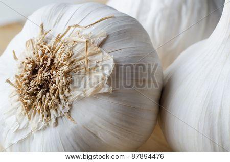 Garlic Bulb Roots Macro