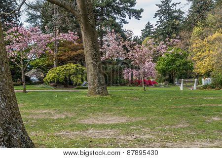 Seward Park In Spring