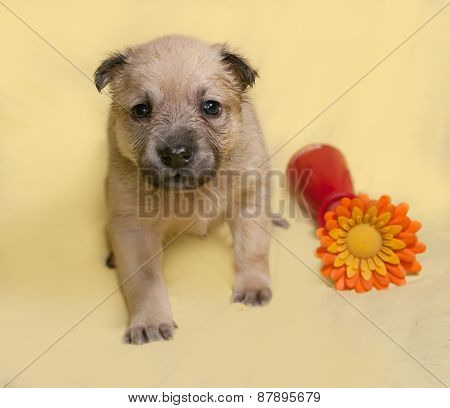 Little Yellow Puppy With Artificial Flower Sits On Yellow