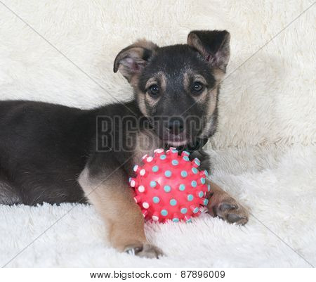 Small Black And Yellow Puppy Lying Next To Ball On White Sofa