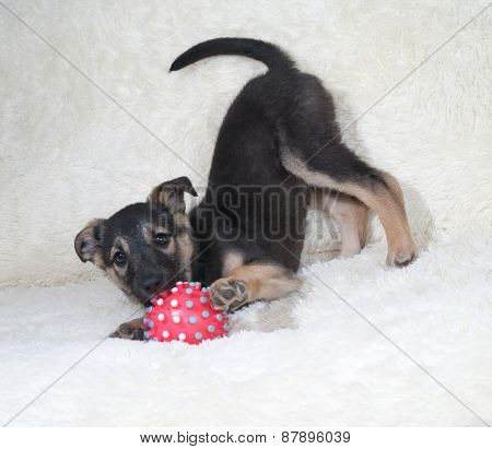 Small Black And Yellow Puppy Playing Ball On White Sofa