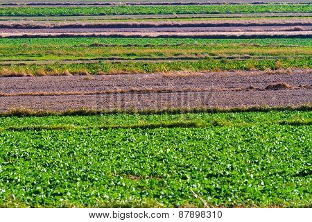 Spring Agricultural Fields With Green Plants And Fallow Plowed Soil. Background.