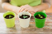 picture of plant pot  - people - JPG