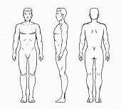 picture of male body anatomy  - Male body - JPG