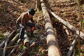 picture of man chainsaw  - Senior caucasian man woodcutter cutting down trees with chainsaw - JPG