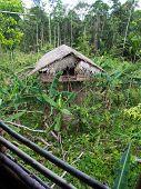 stock photo of tree house  - The jungle Indonesia  - JPG