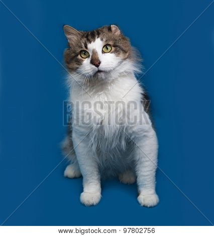 White And Fluffy Tabby Cat Sitting On Blue
