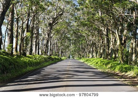 A famous landmark in Kauai Hawaii is a long tree tunnel in a rural part of the island.