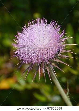 A thistle with a flower