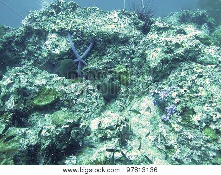 Moray Eels Is In North Andaman, Thailand