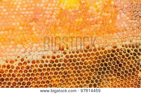 Honeycombs Filled With Honey Closeup