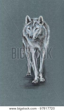 Tundra Wolf Drawing