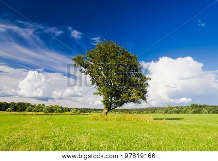 Scenic View Grass Land