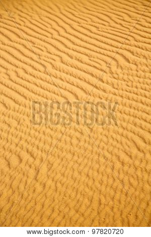 The Brown Sand Dune In  A Morocco Desert