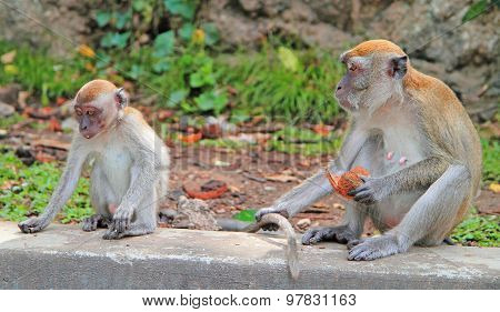 two monkeys are sitting on concrete, Batu caves