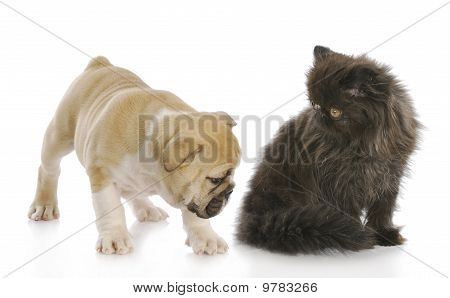 Puppy Sniffing Kittens Backside
