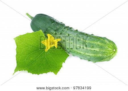 cucumber organic leaf flower