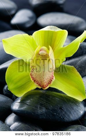Beautiful green orchid with therapy stones