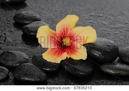 Still life with beautiful tropical flower and therapy stones