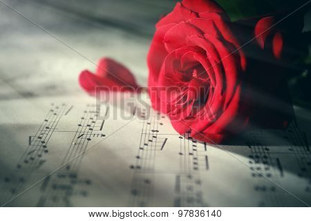 Beautiful rose on music sheets, closeup